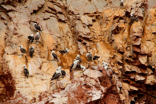 The things to do in Paracas Peru are a tour of the Islas Ballestas and the Paracas National Reserve. I show you why these attractions are worth a visit.